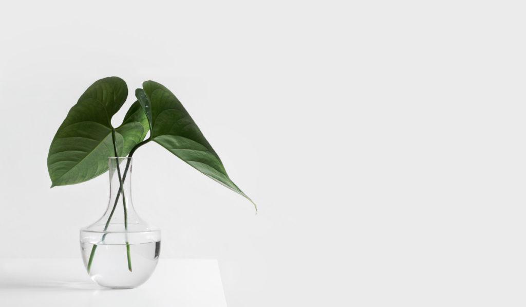 Как прийти к «вещевому минимализму»?